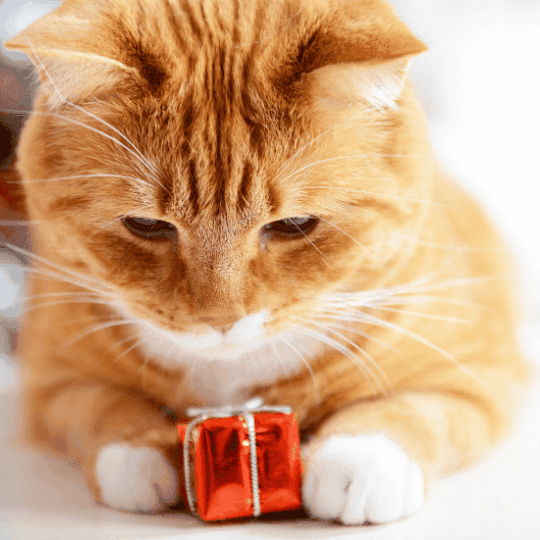 cat owner gifts - article image