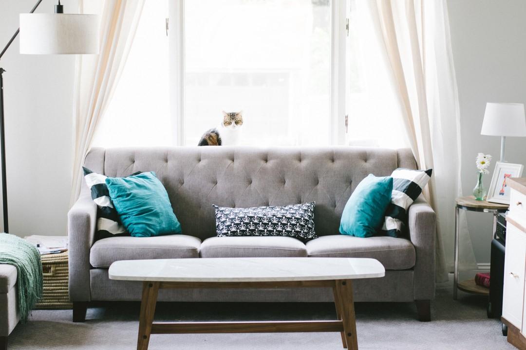 Punaise de lit canapé