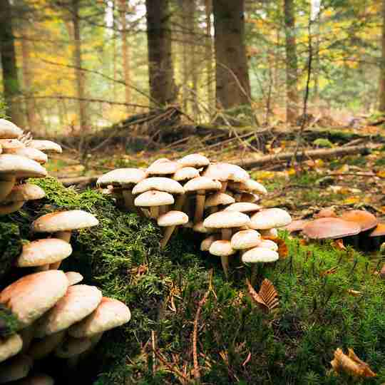 Mushrooms growing in a forest