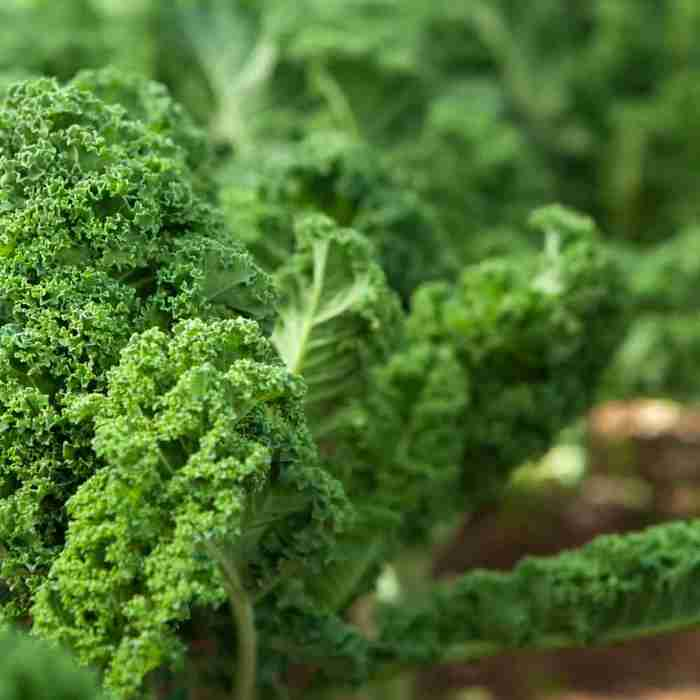 Kale is a source of vitamin c