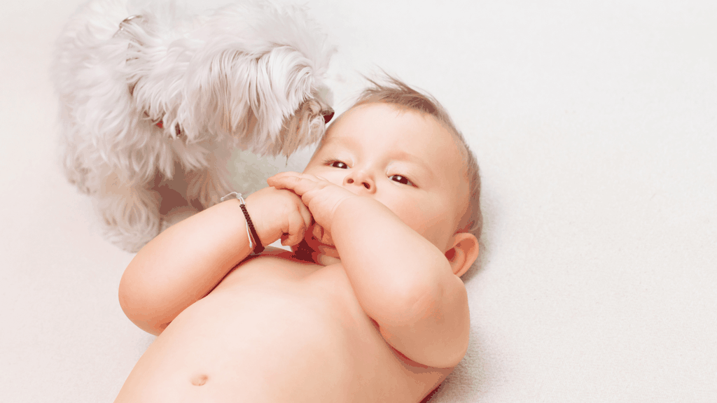 Cover image - pets and babies