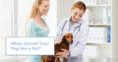 vet holding a dog in the clinic