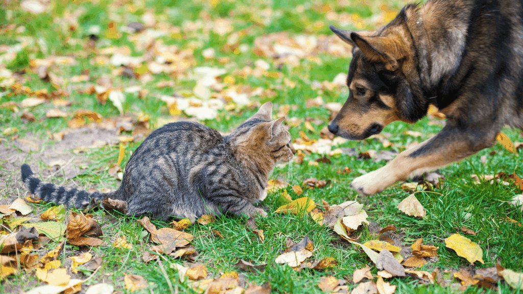 cat and dog hate each other - Blog image