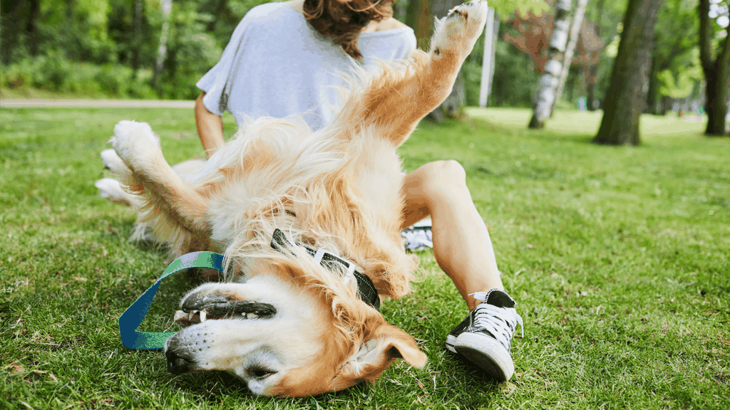 games to play with dogs - Blog banner
