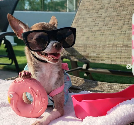 Top 7 Things to do with Your Dog Before Summer Ends