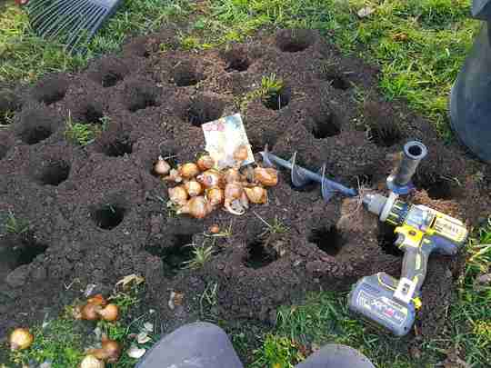planting bulbs with a power planter