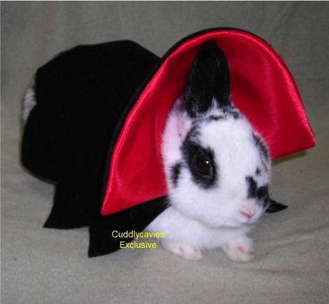 Rabbit in Vampire Costume