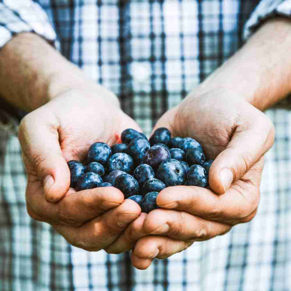 Man holding a handful of blueberries