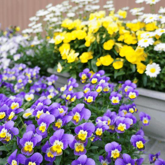 Soil health EM-1 Microbial Inoculant Lush Flowers Healthy Plants