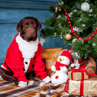 Sweetie Pet-proof tips for this festive season