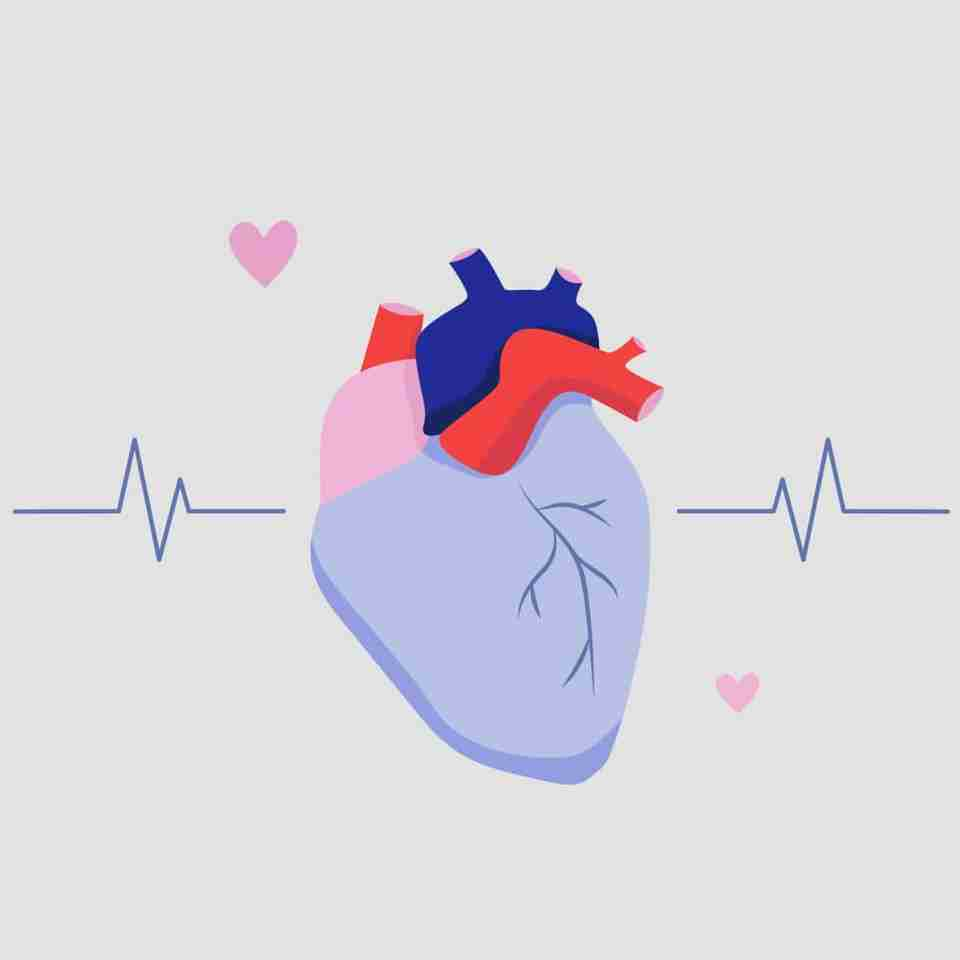 When you're fast asleep, your blood pressure drops, allowing your heart to slow down and rest.