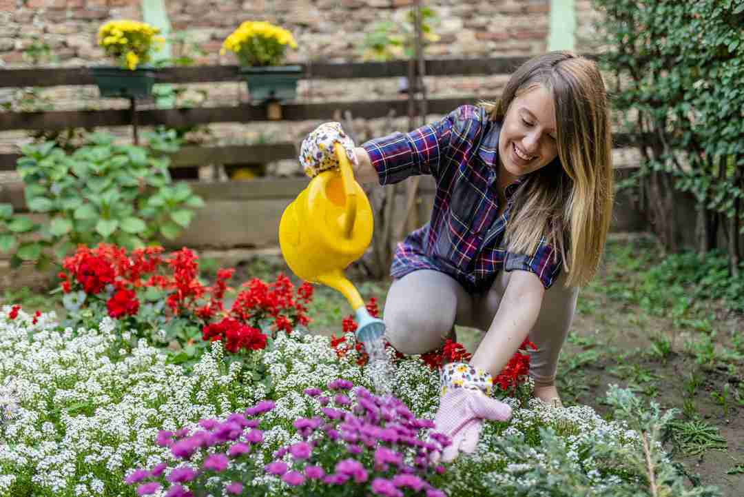 Watering dry flowers with a yellow watering can. woman taking care of her plants ( and watering them ) in her garden. Woman working in garden