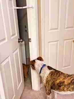 dog door lock and pinch guard