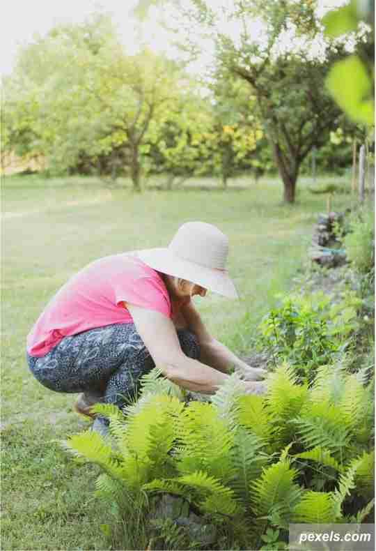 berkebun, halaman rumah, selamat hari ibu, kegiatan bareng ibu