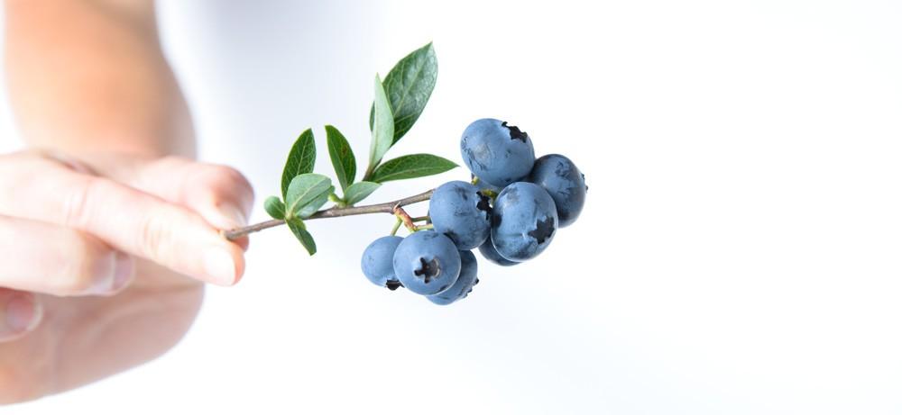 antioxidants for injury image