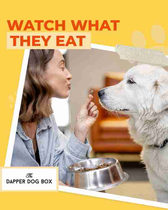 watchdog diet