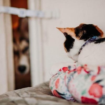 The Door Buddy - Blog - Adjustable Door Strap for Cats