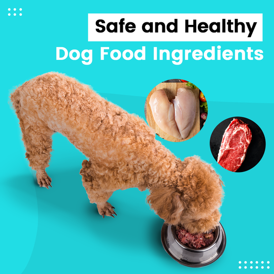 Dog eating on a food bowl, images of fresh chicken meat and beef