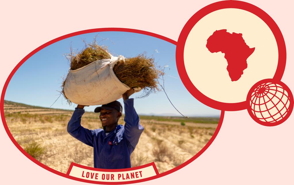 rooibos rocks harvesting love our planet