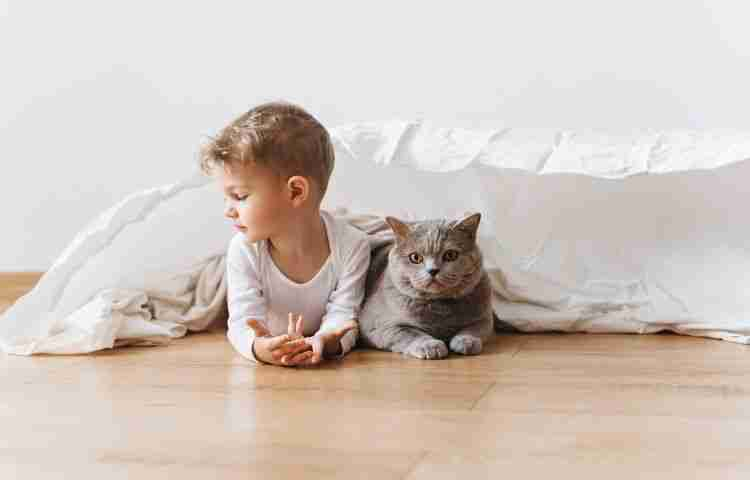 introducing cats to babies - Blog banner