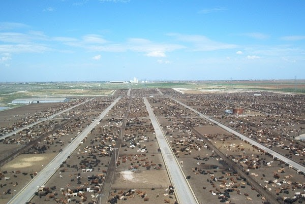Lewter Feed Yard in Lubbock Texas is the first large feedlot on the Great Plains