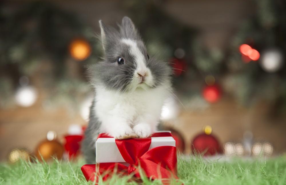 bunny on a Christmas present
