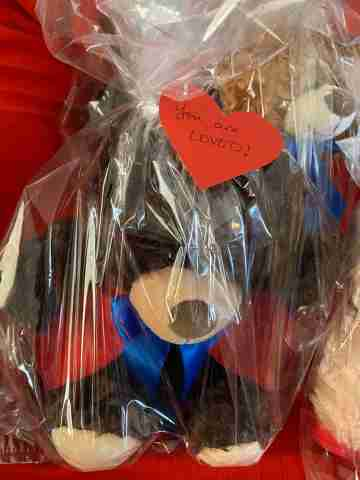 A brown bear with a blue ribbon around its neck inside a plastic bag