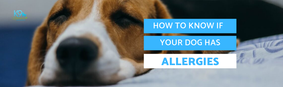 How to Know If Your Dog Has Allergies