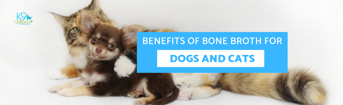 Benefits of Bone Broth for Dogs and Cats