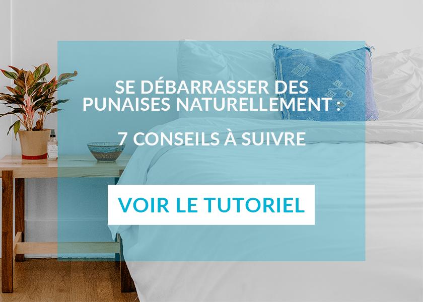 se débarrasser des punaises de lit naturellement en 7 étapes
