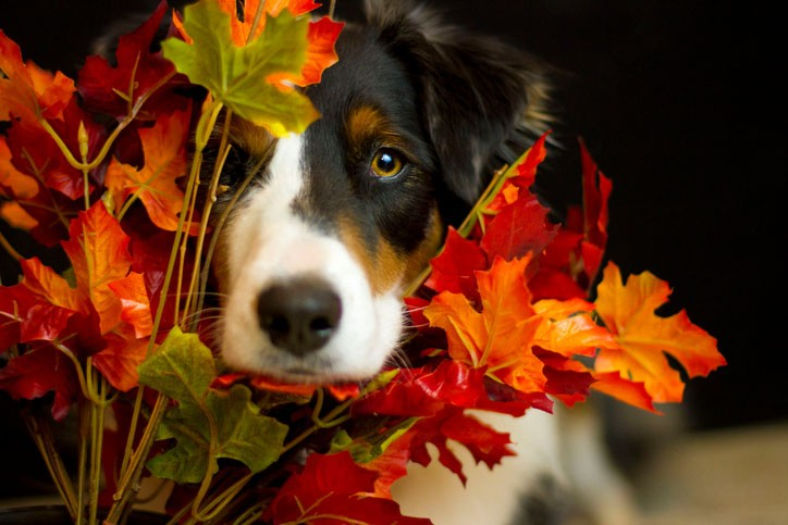How to Safely Include Your Dog on Thanksgiving