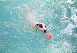 dog swimming exercise