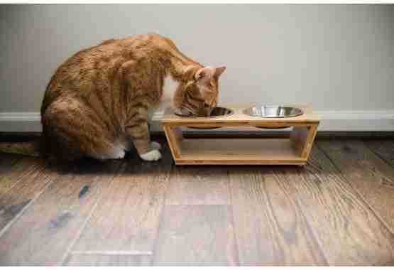 elevated pet feeder is perfect height for cats