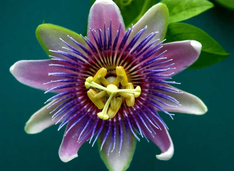 Mag R&R with passionflower for sleep