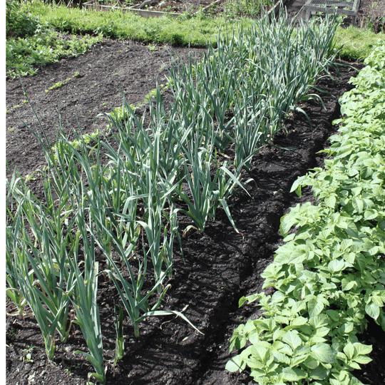 Garden soil Activated EM-1 Soil Health Terakashi bokashi