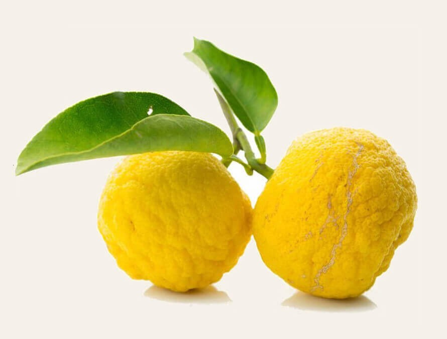 Beautiful and bright wild lemons - key ingredient of Manjish Glow Elixir