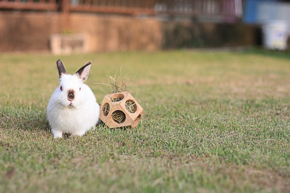 rabbit with hay toy
