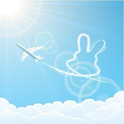 rabbit traveling in an airplane