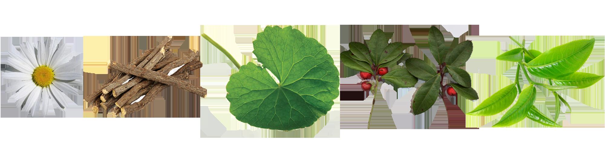 Natural, Ayurvedic ingredients in Tulsi Mint Tonifying Eye Gel