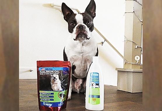 Cooper the Boston - Salmon Oil Treats & Oatmeal Shampoo