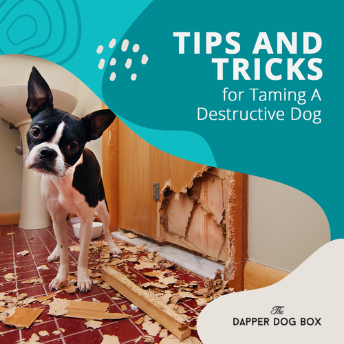 Tips and Tricks for Taming A Destructive Dog