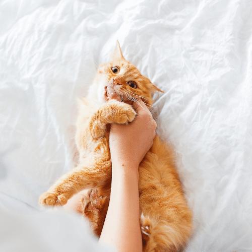 Door Buddy - How do cats say I love you