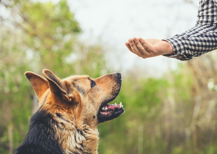 Training Your Dog Is Simple But Not Always Easy