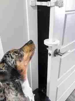 stop door from closing on cat and keep dog out