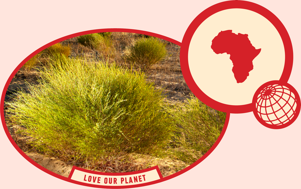 rooibos rocks love our planet nature