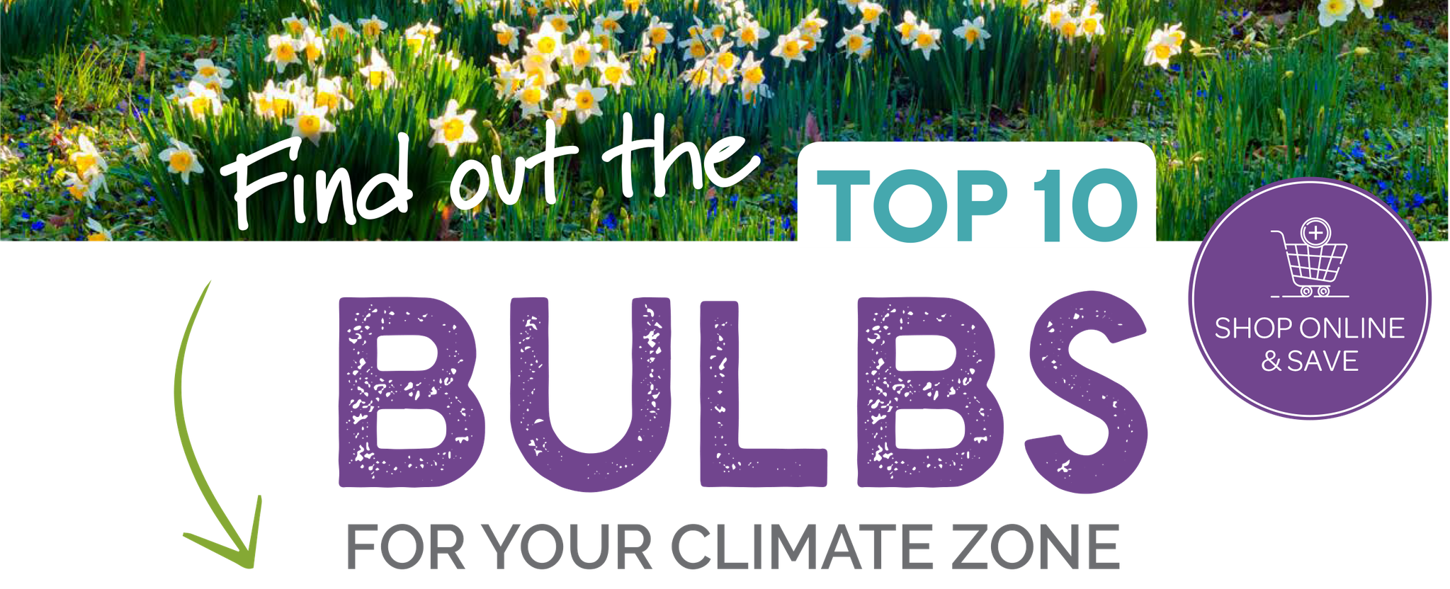 The Top 10 Bulbs for Sydney, Melbourne, Canberra, Southern Highlands, Adelaide, Brisbane