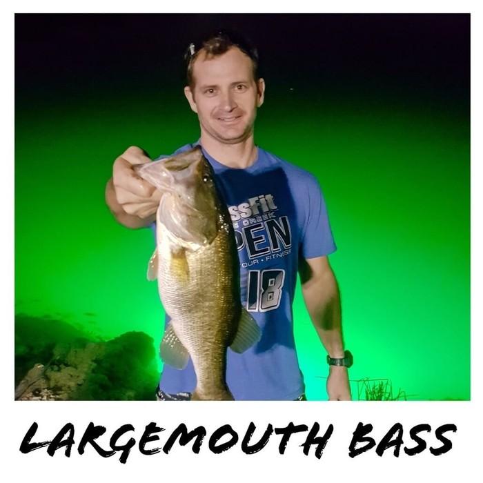 bass fishing on the green fishing light