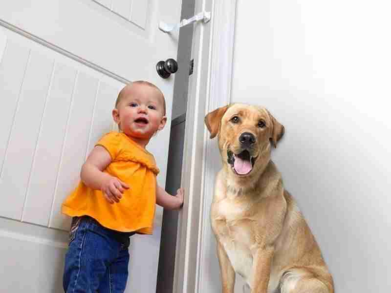 dog proof door latch and baby proof door lock