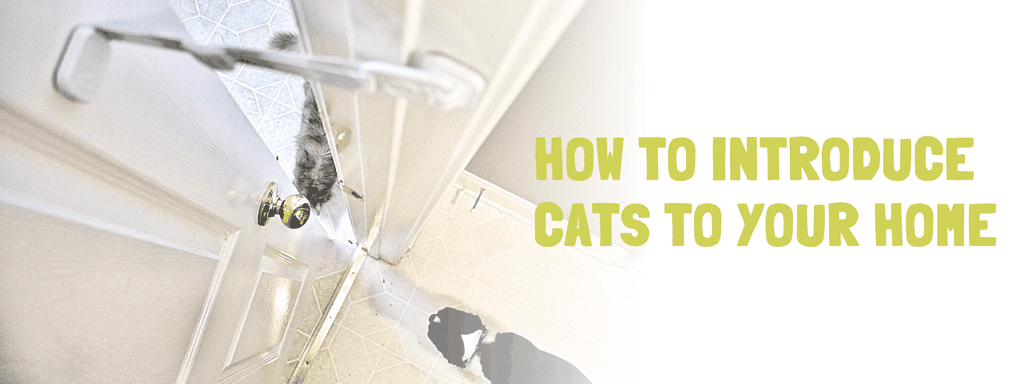 How to Introduce Cats - Banner