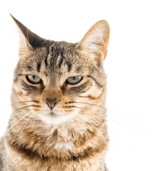 Door Buddy Discounts - Cat Image